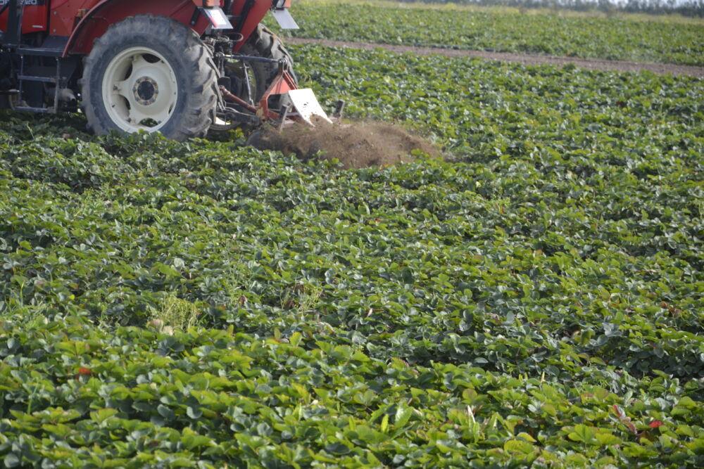Przed przystąpieniem do aplikacji herbicydów o działaniu doglebowym rekomenduje się mechaniczne usunięcie wszystkich chwastów, zwłaszcza na młodych plantacjach