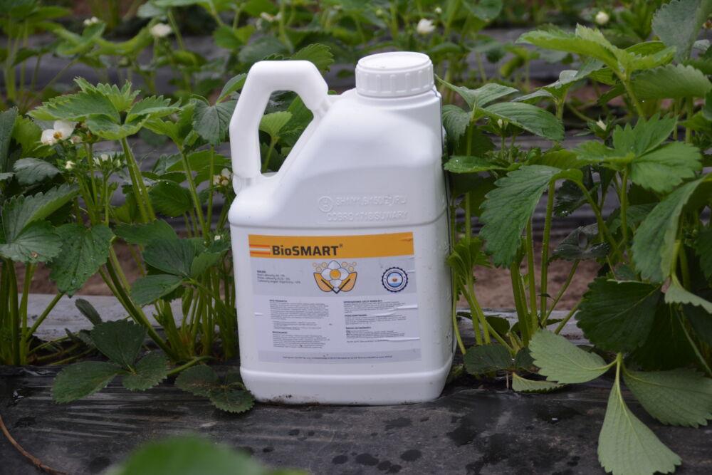 Ważne zabiegi jakie należy wykonać na plantacji truskawek w czasie kwitnienia